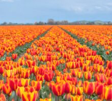 Dutch Tulips part 8 Sticker