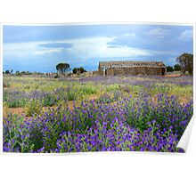 Outback wildflowers Poster