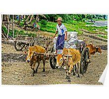 Ox Cart. Poster