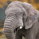 Elephant at Sunset by CSutton