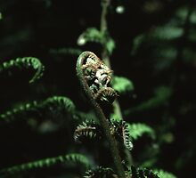Fronds by Ben Ryan