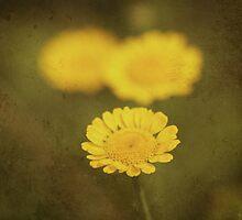 Three by Angela Bruno