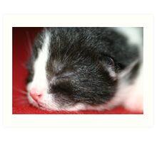 New born kitten sleeping Art Print