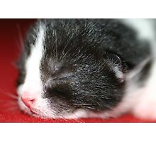 New born kitten sleeping Photographic Print