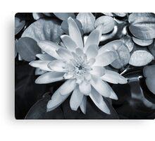 Pale Lily Canvas Print