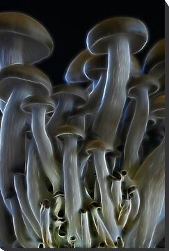 Magic Mushrooms by Ann Garrett