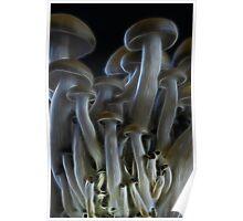 Magic Mushrooms Poster