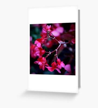 Colour Of Life VII Greeting Card