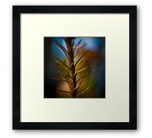 Colour Of Life XI Framed Print