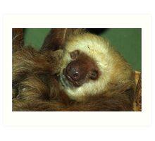 Sleeping Sloth. Art Print