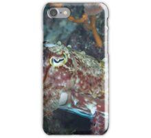 Wary Cuttlefish iPhone Case/Skin