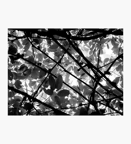 Natural Abstract Photographic Print