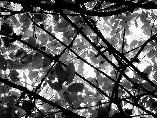 Natural Abstract by Kitsmumma