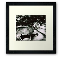 Spice and Tulip Framed Print