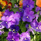 Purple Pansies by Akeg22