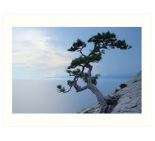 Alone tree on the cliff Art Print