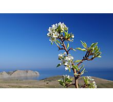Blooming tree above the sea Photographic Print