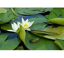 Frogs sitting on the water lily pads Photographic Print