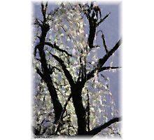 Ice On Tree Photographic Print