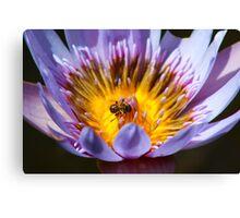 Puny Pollinator Canvas Print