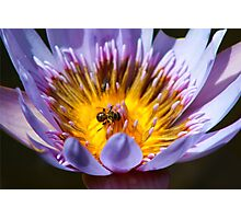 Puny Pollinator Photographic Print