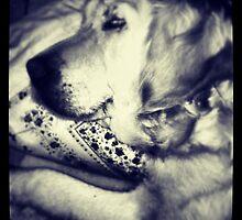 Sleeping day by gluca