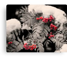 Mountain Ash [Sorbus sitchensis] Canvas Print