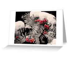 Mountain Ash [Sorbus sitchensis] Greeting Card