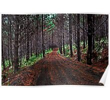 Trailblazing Through Woodhill Forest Poster