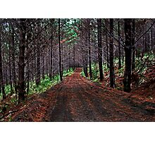 Trailblazing Through Woodhill Forest Photographic Print