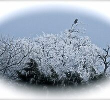 Digital painting of Eagle , and Hoar Frost by NatureGreeting Cards ©ccwri