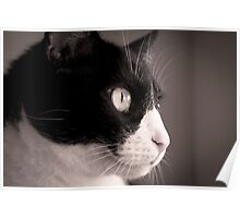 Black and white cat Poster