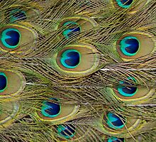 Peacock Perfection by Gayle Shaw