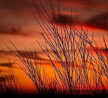 Orange sky with branches by GemaIbarra