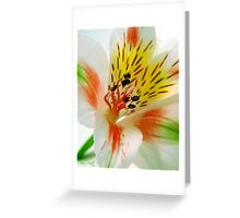 Infatuated Greeting Card