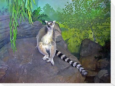 One Cool Lemur by Jeff  Burns