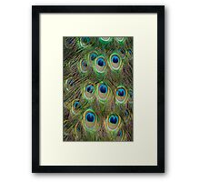 Peacock Plumage Framed Print