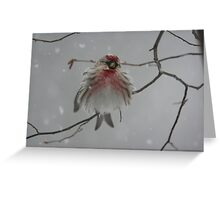 I'm so cold... Greeting Card
