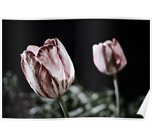Romance Dreams Of Tulips Poster