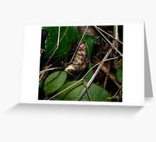 Glow Worms Mating2 Greeting Card