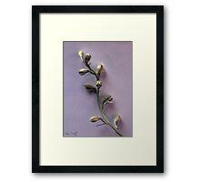 Florets Framed Print