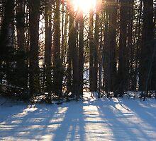 Reflecting Snow by JLTaft