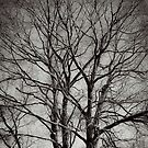 Artistry Of Tree Branches Black And White by MissDawnM