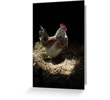 Cock of the roost  Greeting Card