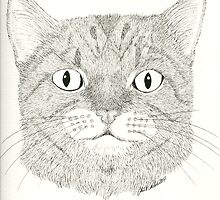 Large eyed cat Pen and Ink by CCallahan