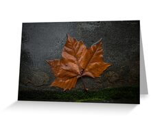 Wet autumn leaf Greeting Card