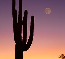 Early Morning Southwest Desert Moon Glow by Bo Insogna