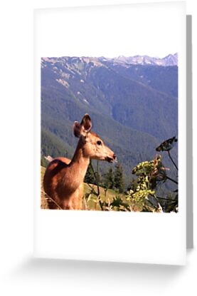 Deer on the Edge of Forever by Rick Lawler
