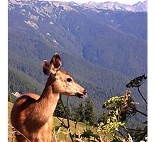 Deer on the Edge of Forever Photographic Print