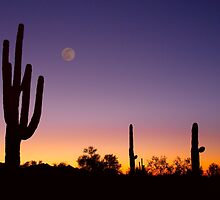 Early Morning Southwest USA Desert Moon Glow by Bo Insogna